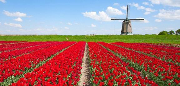 زندگی-در-هلند