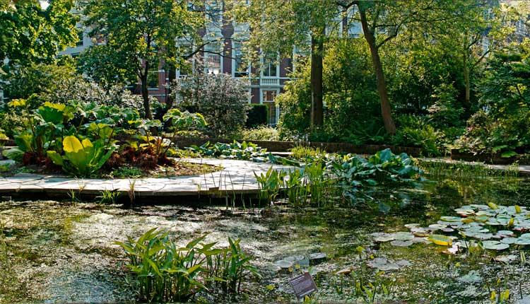 Hortus-Botanicus-amsterdam2
