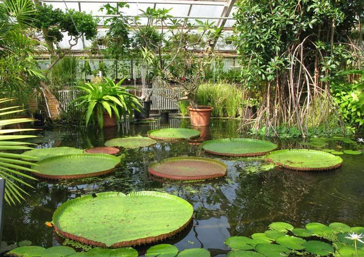 Hortus-Botanicus-amsterdam4