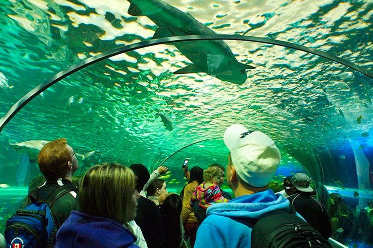 Ripleys-Aquarium-Of-Canada1