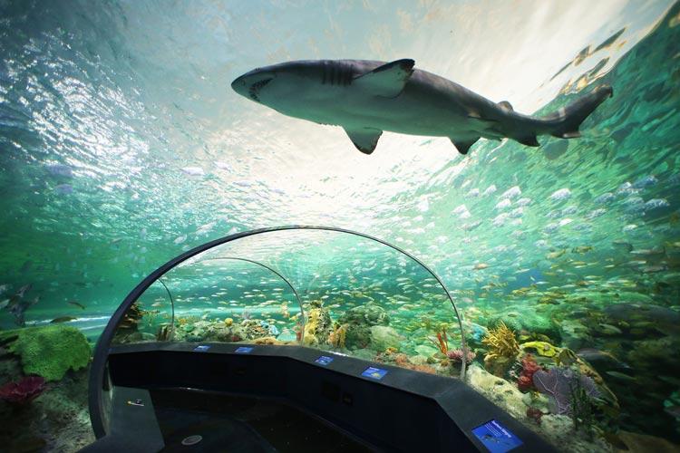 Ripleys-Aquarium-Of-Canada3