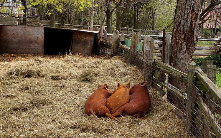 Riverdale-Farm-toronto2